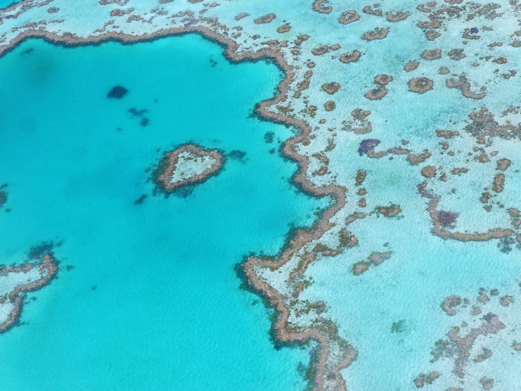 The great barrier reef in Australia is one of the most beautiful places in the world.