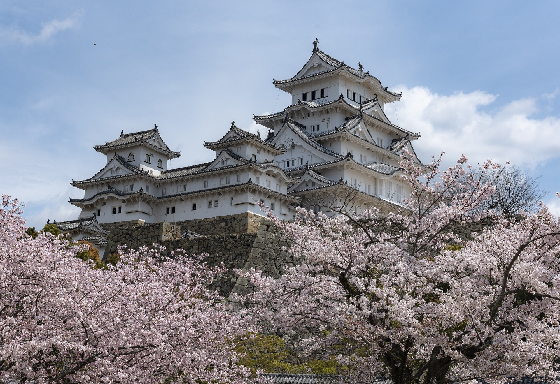 Japanese style castle with cherry blossoms in front