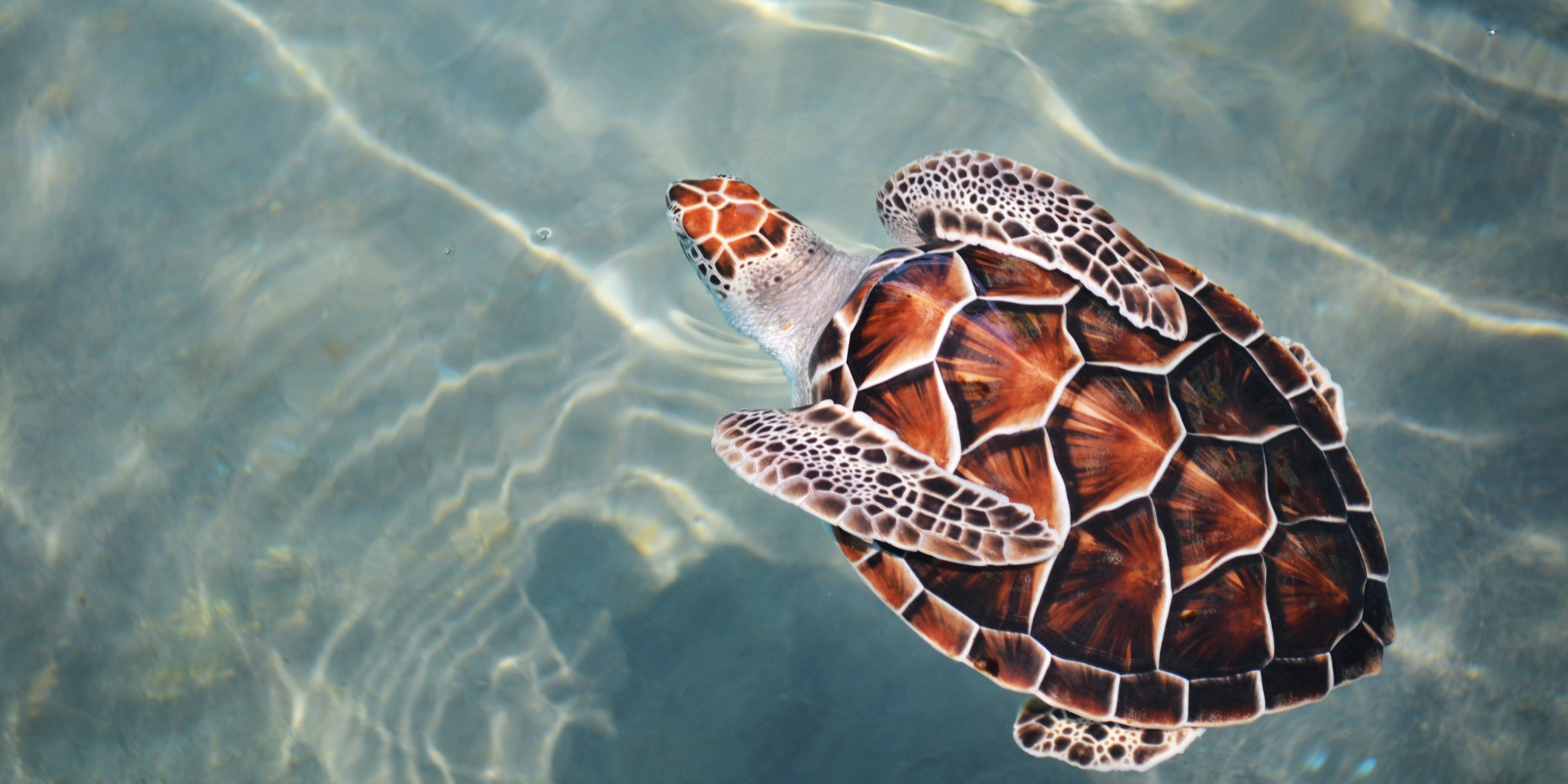 The 10 best places to see turtles.